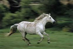 Pretty horse!!!!
