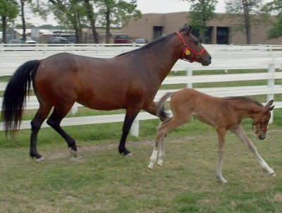 My horse and my cousins foal