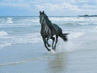 i love blak horses