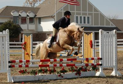 This is my horse, Ryan. I am jumping about 2'6