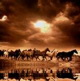 A photo taken of the wild horses by my ranch