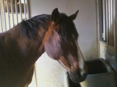 this is one of my horses promiss(mare)