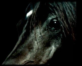 Gorgeous Horse Close Up