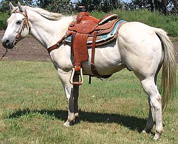Paint Pony For Sale In Nc