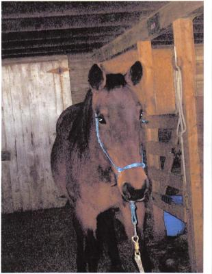 this is the standardbred mare