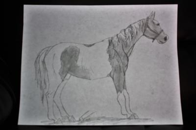 Paint horse (Sorry everyone, it's a bit blurry)