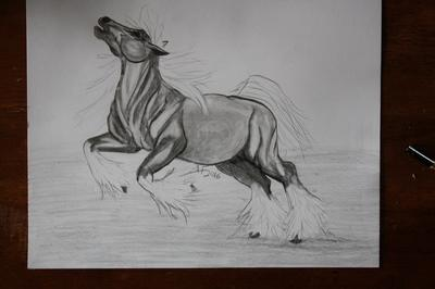 Strong horse - 10/2/2016