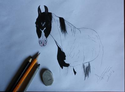 Pinto drawing
