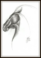 A pencil horse head drawing with an abstract look.