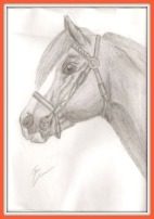 A horse head pencil drawing. The horse is wearing a bridle.