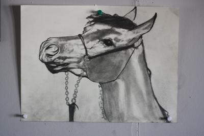 Playful Arabian