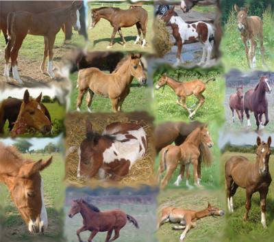 I love foals!!!