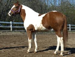 MY OTHER HORSE AMIGO