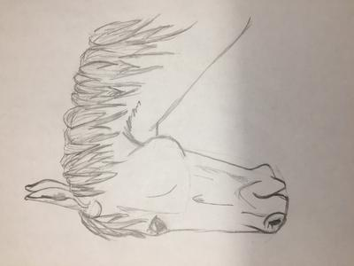 This is supposed to be an old horse