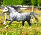 Jaxon's Horse Misty