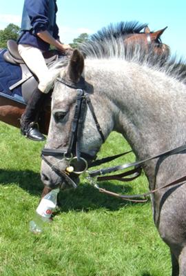 My pony drinking coke