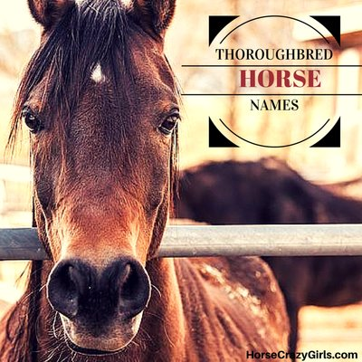 Share your favorite Thoroughbred horse names!