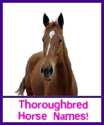 Throroughbred horse names