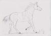 Basuto Running Horse