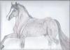 fiesta dancing horse