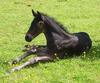The lead mare