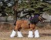 Clydesdale horse costume