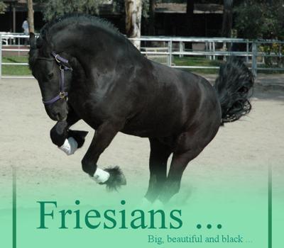Fav. Breed: FRIESIAN