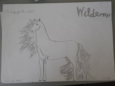 Wilderness the wildest brumby