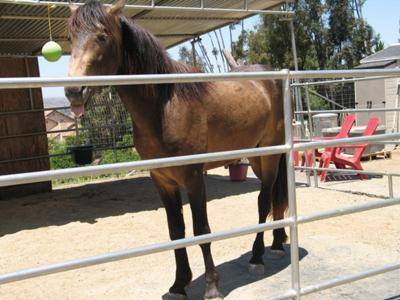 one of my aunts horses hercules :D