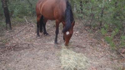 This is the pony I ride, Annie. The best pony EVER!