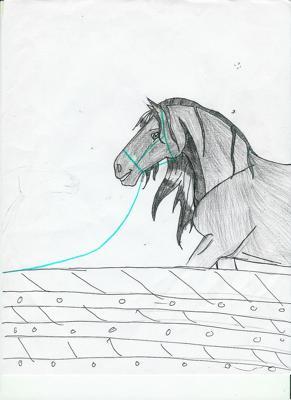 im horsebackrider22 on Deviantart