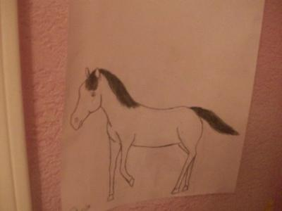 a horse drawing..