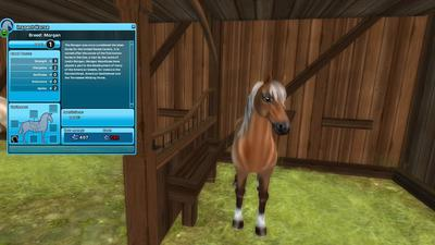 The Morgan from Star Stable