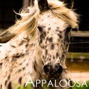Favorite Horse Breeds