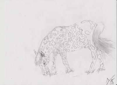 Appaloosa drawing