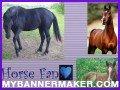Horse fan!