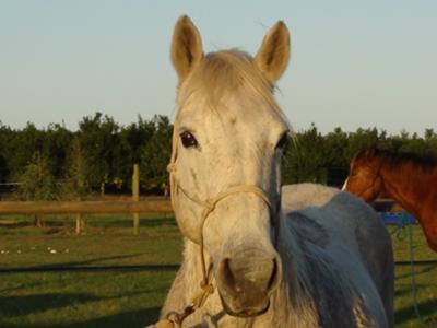My sister's horse, Suzy