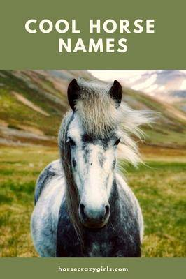 Cool Horse Names