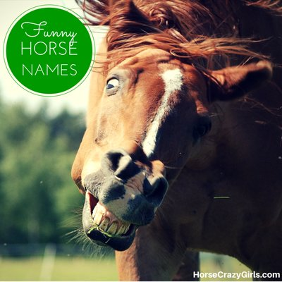 Share your favorite funny horse names!