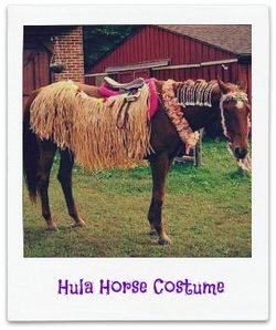 A horse dressed up in Hula costume with a straw skirt on.
