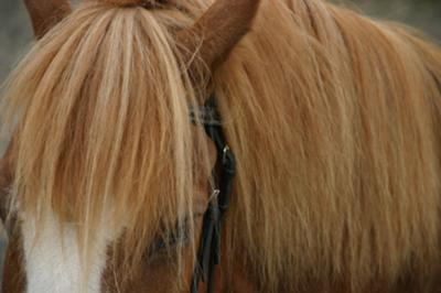 Prementioned forelock