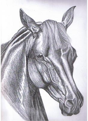 detailed horse head
