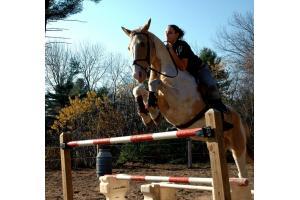 my horse Tinker bell
