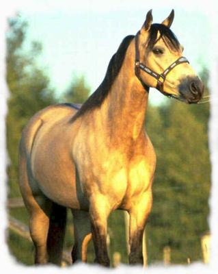 I think this horse was painted.Isn't it magnificent?