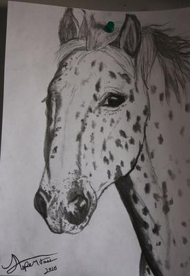 Appaloosa drawing - take a look