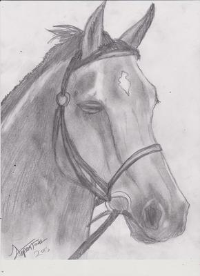 Horse Drawing by ASPEN/12/6/2015