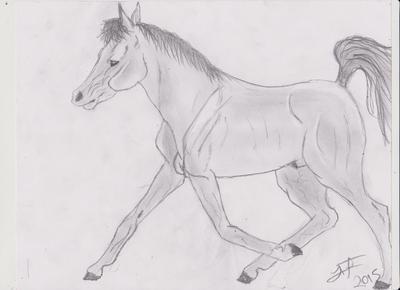 Arabian # 1