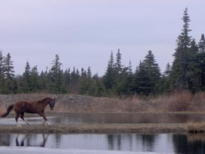 this is my horse bueno running on the land in the water just next to our barn i thought this pic was gourgeus or buetyful!