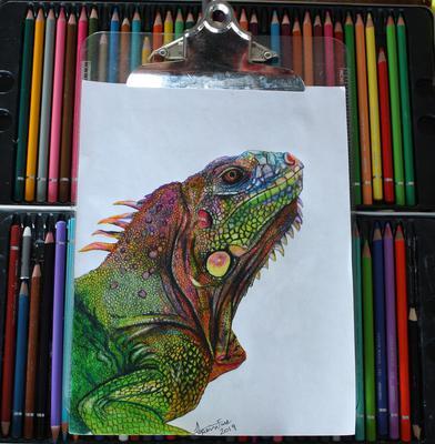 Rainbow Iguana 2019